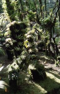 ciénaga caribeña