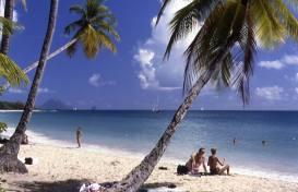 Martinique1993plagedereves1