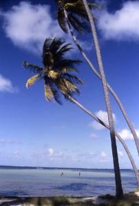 Martinique1993plagepalmier